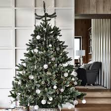 Nordmann Fir Christmas Tree Seedlings by Christmas Trees The White Company Uk