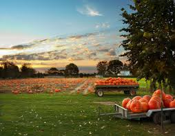 Papas Pumpkin Patch Kansas by Pin By Emily Smith On Autumn Pinterest Linus Van Pelt