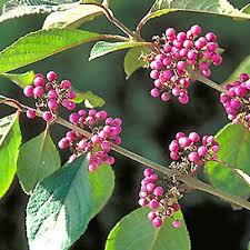 Knollwood Garden Center and Landscaping Nursery Trees and