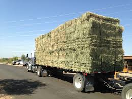 Bermuda Hay - Celebrity Equine LLC Filerefueling Hay Truckjpg Wikimedia Commons Highway 99 Reopens In South Sacramento After Hay Truck Fire Fox40 Semi Truck Load Of Kims County Line Did We Make A Small Stock Image Image Biological Agriculture 14280973 Boys Life Magazine Old With Photo Trucks Rusty 697938 Straw Trailers Mccauley Richs Cnection Peterbilt 379 At Truckin For Kids 2013 Youtube Hay Train West Coast Style V1 Truck Farming Simulator 2019 John Deere Frontier Implements Landscape Mowing Dowling Bermuda Celebrity Equine Llc