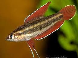 quel poisson pour un petit aquarium 28 images poissons eau de