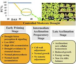Pumpkin Stages Of Growth Worksheet by Molecular And Physiological Analysis Of Drought Stress In
