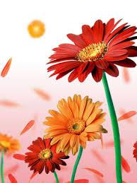 Beautiful Flower Wallpaper For Cell Phone Logo