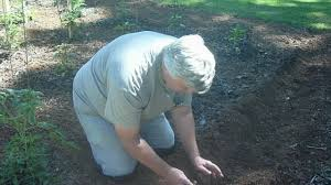Planting Potatoes In A Small Backyard Garden - YouTube Texas Garden The Fervent Gardener How Many Potatoes Per Plant Having A Good Harvest Dec 2017 To Grow Your Own Backyard 17 Best Images About Big Green Egg On Pinterest Pork Grilled Red Party Tuned Up Want Organic In Just 35 Vegan Mashed Potatoes Triple Mash Mashed Pumpkin Cinnamon Bacon Sweet Gardening Seminole Pumpkins And Sweet From My Backyard Potato Salad Recipe Taste Of Home