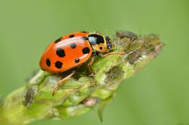 Attracting Insects To Your Garden by Attracting Beneficial Insects To Your Garden