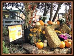 Pumpkin Patch Colorado Springs 2015 by Ten Pumpkin Patches And Festivals To Carve Into Your Colorado
