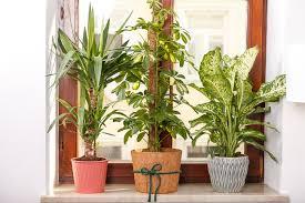 new in pflanzen in unserer wohnung josie