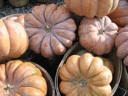 Varieties Of Pumpkins by Untitled Document