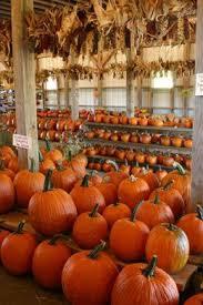 Chesterfield Berry Farm Pumpkin Patch 2015 by Best 25 Pumpkin Patch Corn Maze Ideas On Pinterest Pumpkin