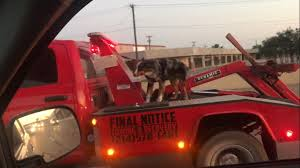 100 Red Dog Trucking Riding On The Back Of A Tow Truck