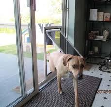 Best Pet Doors For Patio Doors by Best 25 Pet Screen Door Ideas On Pinterest Dog Screen Door