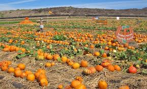 Griffin Farms Pumpkin Patch by 11 Socal Pumpkin Patches Where It Always Feels Like Fall L A Weekly