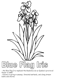 Blue Flag Iris Coloring Page