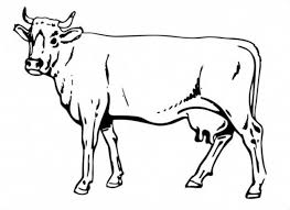 Free Cow Coloring Pages Printable Freecoloring Pagesorg