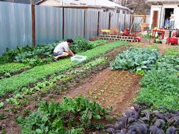 The Backyard Farming Connection Garden Update Pics On Marvelous ... How To Start A Backyard Farm Animals Backyards And Veggies More Restaurants Try Farming Cpr These Folks Feed Their Family With Garden In Swimming Pool Started Spin Cornell Small Program Friday The Coop Is Almost Complete The Empty Sheeps Lambs Hens Youtube On An Acre Or Less Living Free Guides Dandelion House Chalkboard Thoughts Series Cnection Planning A Bee Garden Pictures On