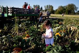 Schaefers Pumpkin Patch by No Local Shortage Of Pumpkins As Halloween Nears But Your