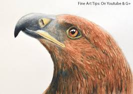 Watercolour Pencils Artwork How To Draw An Eagles Head With Watercolor