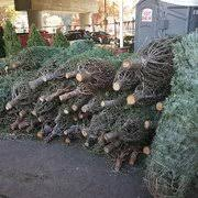 Delancey Street Christmas Trees Berkeley Ca by Brent U0027s Christmas Trees 58 Photos U0026 68 Reviews Christmas Trees