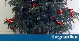 5ft Christmas Tree Tesco by Replantable Christmas Trees Are Festive Success Story Money