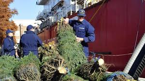 In Chicago Christmas Trees Were Delivered By The Coast Guard Cutter Mackinaw US