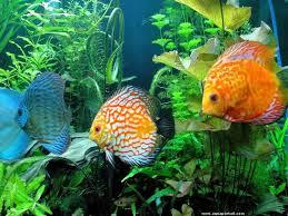 aquarium poisson prix les 15 meilleures images du tableau aquariophilie sur