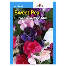 Burpee Sweet Pea, Burpee's Galaxy Mix