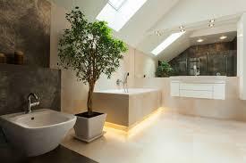 pflanzen fürs badezimmer blumenversand edelweiß