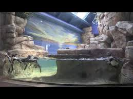 Moody Gardens Introduces Second Penguin Habitat as Part of $37