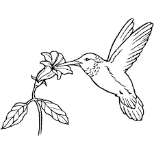 Coloring Pages Birds And Flowers Realistic Hummingbird Page Bird Sheets For Projects Pictures Of