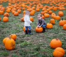 Pumpkin Picking In Chester Nj by Pumpkin Patches Near Nyc Where Kids Can Pick Their Own