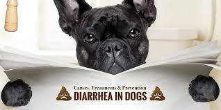 Too Much Pumpkin For Dogs Diarrhea by Diarrhea In Dogs U2014 Causes Treatments U0026 Prevention