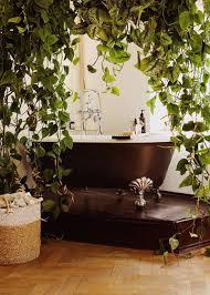 diese pflanzen eignen sich für das badezimmer sz magazin