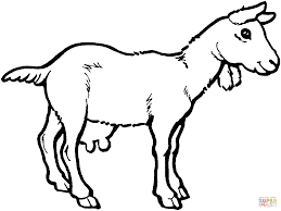 Click The Nanny Goat Coloring Pages To View Printable Version Or Color It Online Compatible With IPad And Android Tablets