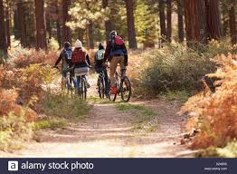 Group Of Friends Riding Bikes On A Forest Trail Back View