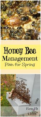 Best 25+ Backyard Beekeeping Ideas On Pinterest | Beekeeping, Bee ... Welcome To The Hive Beverly Bees Beginners Guide Keeping Bee Keeping And Bkeeping Backyard Beehive Image With Capvating How Keep Out Of Like A Girl 10 Mistakes New Bkeepers Make References The Honey Bee Honey Everything You Need To Know About Producing Your Best Images Picture Raise In How Much Room Should I Give My Bees Bees In Backyardbees Huney Back Yard Bulgari 6 Awesome Designs Inhabitat Green Design For Step By