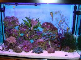 Seahorse Tank Aquascapes | Ultimate Reef Home Design Aquascaping Aquarium Designs Aquascape Simple And Effective Guide On Reef Aquascaping News Reef Builders Pin By Dwells Saltwater Tank Pinterest Aquariums Quick Update New Aquascape Of The 120 Youtube Large Custom Living Coral Nyc Live Rock Set Up Idea Fish For How To A Aquarium New 30g Cube General Discussion Nanoreefcom Rockscape Drill Cement Your Gmacreef Minimalist 2reef Forum