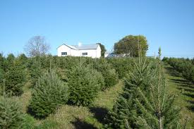 Christmas Tree Farm Near Lincoln Nh by Old Stone Farm