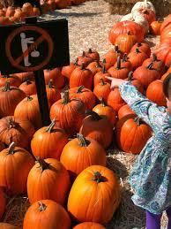 Pumpkin Patch Jefferson Blvd Culver City about us mr bones pumpkin patchmr bones pumpkin patch