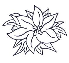 Poinsettia Color Sheet How To Make Flower Sketch For Christmas Flowers Coloring Pages