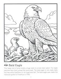 Harpy Eagle Coloring Pages Bald Print American Page Printable Science Facts Animals Color Sheets Teaching Resources