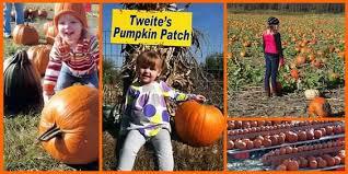 Pumpkin Patches Mankato Mn by Tweite U0027s Family Farm U2014 Vacation Spots Pinterest Pumpkins