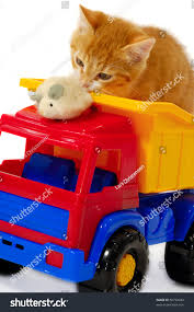 Sweet Kitten Playing Mouse Toy Truck Stock Photo (Edit Now) 50792944 ... Tonka Wikipedia Toys Trucks Books In Norwich Norfolk Gumtree 2019 Magic Inductive Truck Follow Drawn Line Car Toy For Kids Surprise Deal Big Save Childrens Day Gift Boys Colctible Cute Animal Model Dinosaur Panda Vintage Galoob The 4 X 1984 Toy Truck Nice Working Trucks For Toddlers Dump Playing Scoop Rescue Shapesorting Sense Nothing Can Stop By Nostalgia Zmoon Transport Carrier With 6 Mini 116th Little Buster Toys Black Angus Cow Cheap Transporter Find Deals On