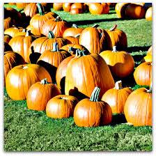 Pumpkin Farm In Palos Hills by Maiden Nc Pumpkin Patch