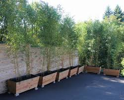 Bamboo Planters Install Bamboo Fence Roll Peiranos Fences Perfect Landscape Design Irrigation Blg Environmental Filebamboo Growing In Backyard Of New Jersey Gardener Springtime Using In Landscaping With Stone Small Square Foot Backyard Vegetable Garden Ideas Wood Raised Danger Garden Green Privacy For Your Decorative All Home Solutions Spiring And Patio Small Square Foot Vegetable Gardens Oriental Decoration How To Customize Outdoor Areas Privacy Screens