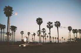 Tumblr Palm Trees Vintage