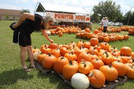 North Lawrence Pumpkin Patch by Calendar In October Filled With Fall Festivals Events Tbo Com