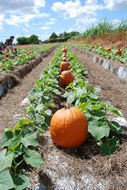 Pumpkin Patch Hospitality San Bernardino Ca by 8 Best Oak Glen Yucaipa Places To Visit In The Inland Empire