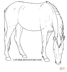 Mustang Mare From Horses