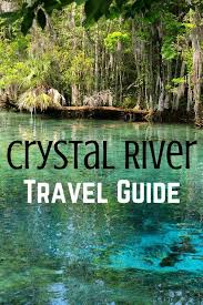 Travel Guide 5 Unique Things To Do In Crystal River Florida