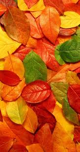 Autumn Carpet Made From Colorful Leaves